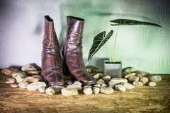 Still life, beautiful lady boots Stock Photography
