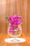 Still life Beautiful Purple orchid flower Stock Photos