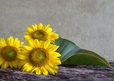 Still life beautiful sunflowers Stock Photography
