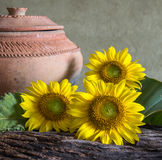 Still life beautiful sunflowers. In nature light Royalty Free Stock Photos