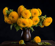 Still life with beautiful sunflowers Royalty Free Stock Photo