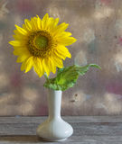 Still life beautiful sunflowers Royalty Free Stock Image