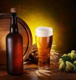 Still life with beer. Wheat and hops Royalty Free Stock Image