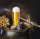 The still life with beer Stock Photos