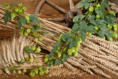 Still life with beer barley and hops Stock Image