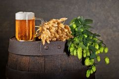 Beer Glass, Hop Cones and Wheat Royalty Free Stock Photos