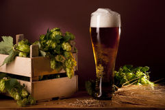 Still life with beer and hops Stock Photos