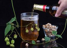 Still life with beer. Mug, hop and pistachios Royalty Free Stock Photos