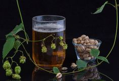 Still life with beer. Mug, hop and pistachios Stock Photography