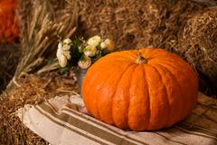 Big pumpkin in the barn royalty free stock images