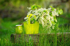 Still life with bird-cherry blossom. And green jar in the spring garden Royalty Free Stock Photography