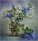 Still life with a bird cherry tree and myosotis. A bouquet of myosotis and bird cherry trees is in a glass vase Stock Photos