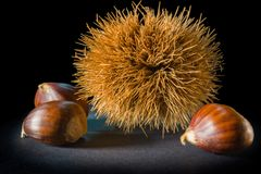 Still life on black background some chestnuts. And a chestnut hedgehog Royalty Free Stock Images