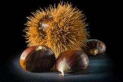 Still life on black background some chestnuts. And a chestnut hedgehog Stock Photos