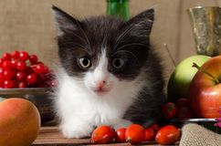 Black and white kitten among fruits royalty free stock photo