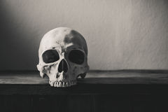 Still life black and white photography with human skull on wood. En table background royalty free stock images