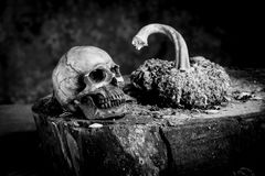 Still life black and white photography with human skulls on wood. Table Stock Photos
