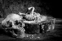 Still life black and white photography with human skulls on wood. Table royalty free stock image
