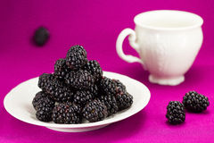 Still life with blackberries Royalty Free Stock Images