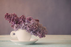 Still life with  blooming branch of lilac Stock Images