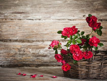Still life with a blooming branch of rose Royalty Free Stock Images