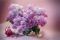 Still life with blooming branches of lilac Stock Images