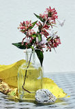 Still life with blossom branch Stock Photos