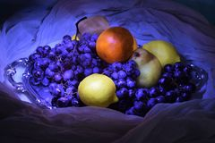 Still life of blue grapes and different fruits. Painting with light. royalty free stock photos