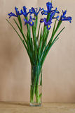 Still-life with blue irises. Bouquet of irises in a transparent vase Royalty Free Stock Photo