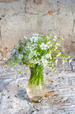 Still life bouquet Royalty Free Stock Photos
