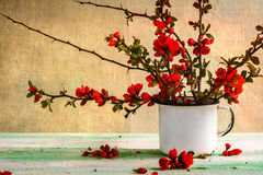 Still life bouquet barberry Stock Images
