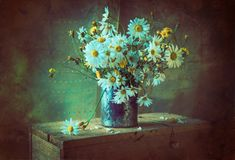 Still life bouquet chamomile flowers stock image