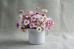 Still life bouquet daisies Stock Images