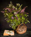 Still life with bouquet of flowers and the book. Still life with bouquet of flowers, dried herbs in a basket and the book Royalty Free Stock Images