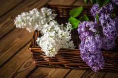 Still-life with a bouquet of lilac Stock Image