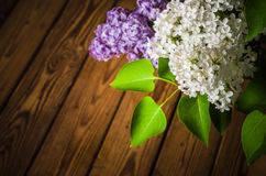 Still-life with a bouquet of lilacs Stock Photos