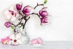Still life with bouquet of pink magnolia flowers in bottles with gift box and macaroons on white table royalty free stock photo