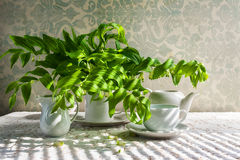 Still life bouquet polygonatum white crockery Royalty Free Stock Images