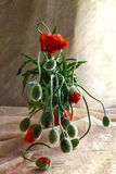 Still life bouquet poppies Royalty Free Stock Photos