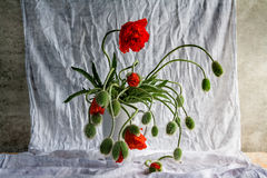 Still life bouquet poppies Royalty Free Stock Photography