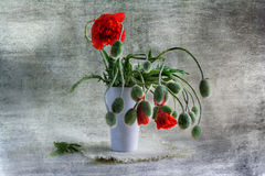 Still Life Bouquet Red Poppies Stock Image