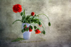 Still Life bouquet red poppies Stock Images