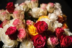 Still life bouquet of roses royalty free stock photos