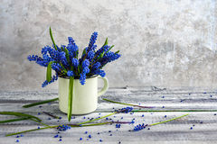 Still life bouquet spring flowers blue Royalty Free Stock Photography
