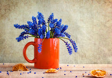 Still life bouquet spring flowers blue Royalty Free Stock Photos