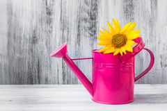 Still life bouquet sunflowers watering can Royalty Free Stock Image