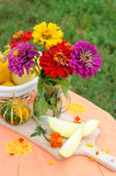 Still life with a bouquet of zinnia flowers Royalty Free Stock Photo