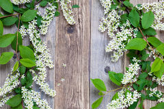 Still life with branch of blossom bird cherry Stock Photography