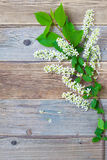 Still life with branch of blossom bird cherry. On vintage boards antique table with copy space Royalty Free Stock Photo