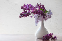 Still life with a branch of lilac Stock Photography